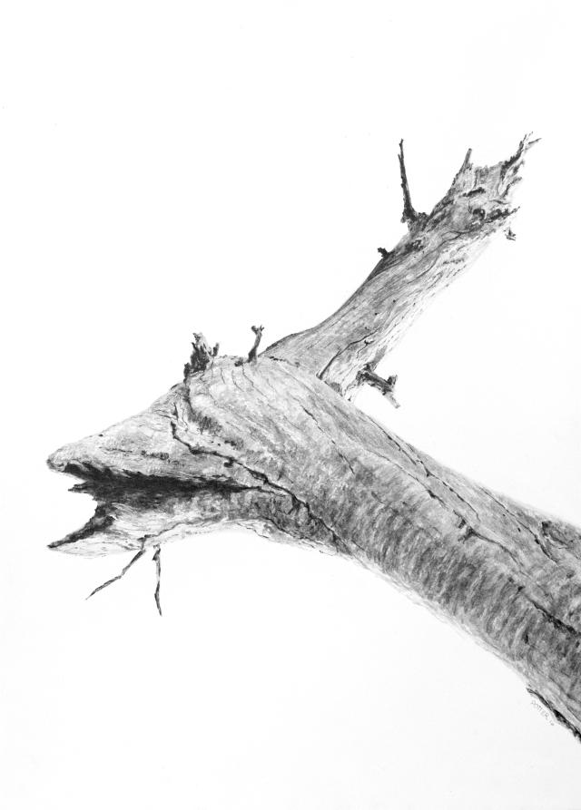icarus-wing-sketch
